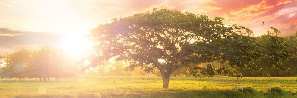 Erleuchtung hinter Baum